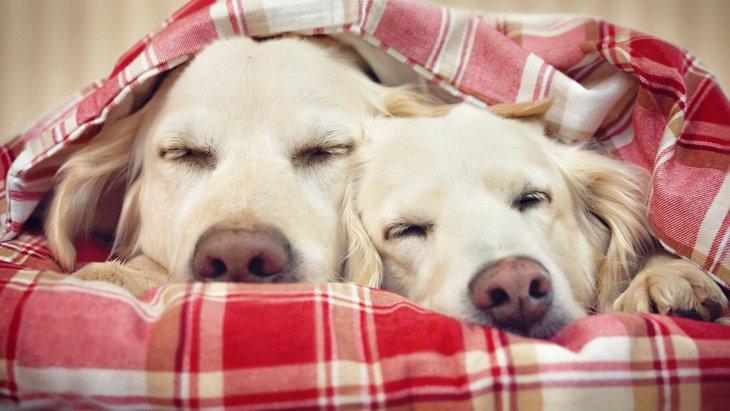 犬同士がくっついて寝る時の心理4つ