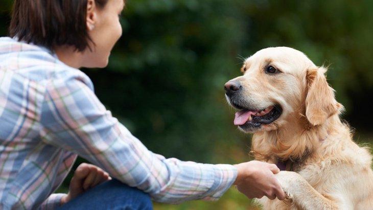 犬を人間扱いするのが良くない5つの理由