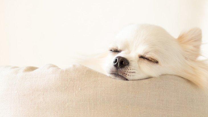犬が寝る前によくする4つの行動や仕草