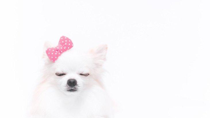 犬が『ありがた迷惑』と思っている飼い主の行動4選