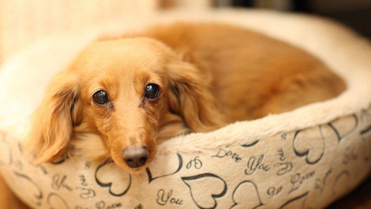 老犬がごはんを食べないときの対処法5つ