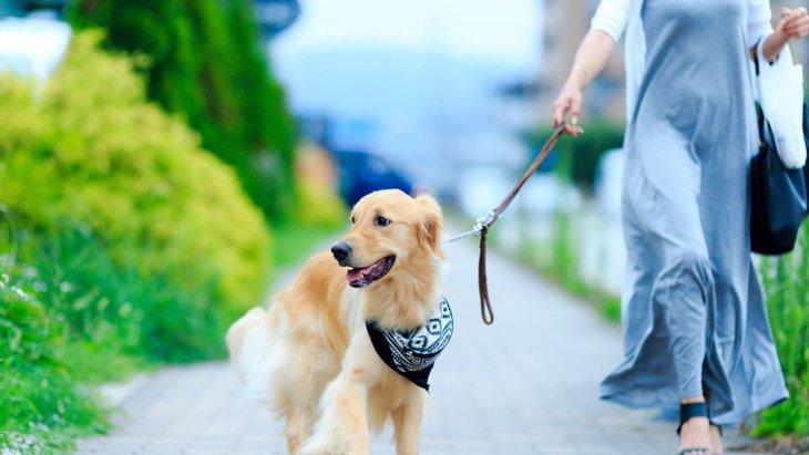 犬がお散歩中に誤飲しがちな危険物5つ