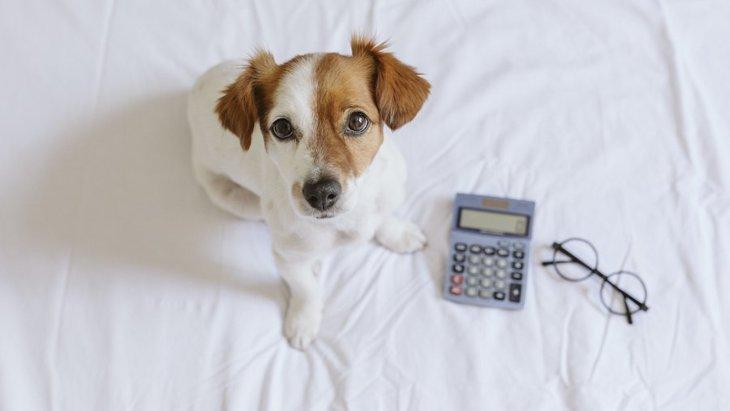 犬が年を取るスピードはどのくらい?人間に換算すると何歳なの?