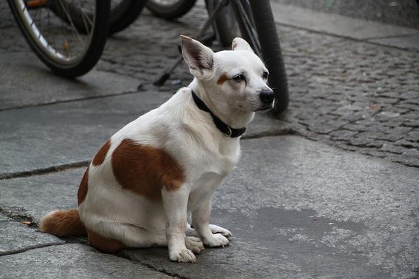 愛犬の長期間預かりをお願いする際に注意すること