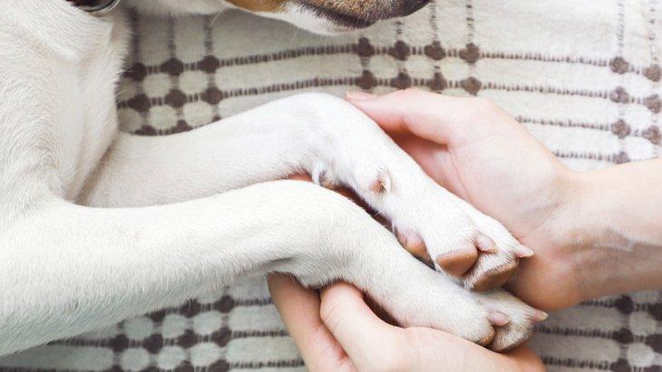 犬が死ぬ間際に見せる5つの前兆