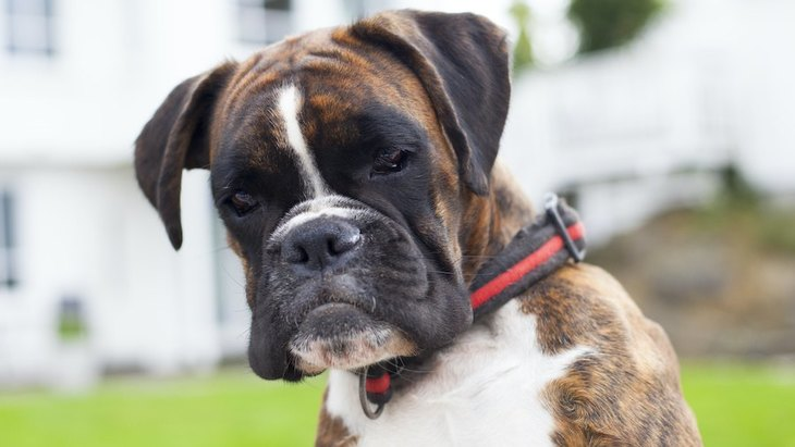 犬から絶対に愛されない人がしているNG行為5選