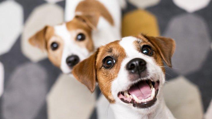 【枚方市】愛犬と行きたい室内ドッグランのあるカフェ「ジュール」