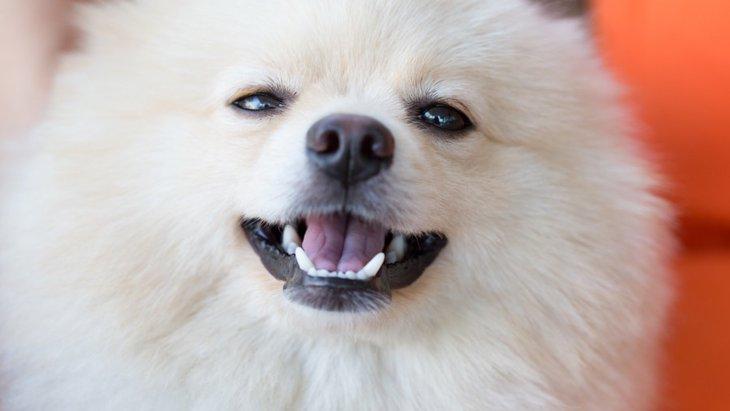 犬の口 形でわかる6つの気持ち
