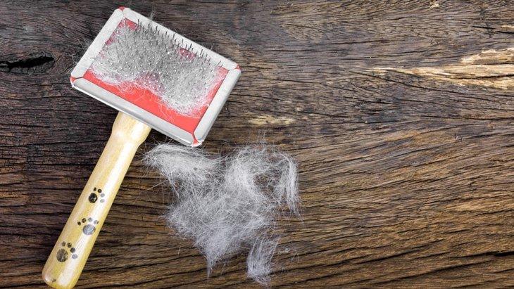 犬の毛が抜ける「換毛期」の時期とは?