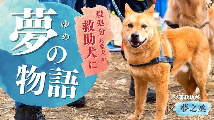 夢物語なんかじゃない!殺処分寸前だった犬が命を救う『災害救助犬』へ!