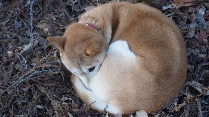 犬が低体温症になる原因と症状、対処法まで