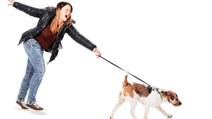 犬の引っ張り癖を直す対処方法