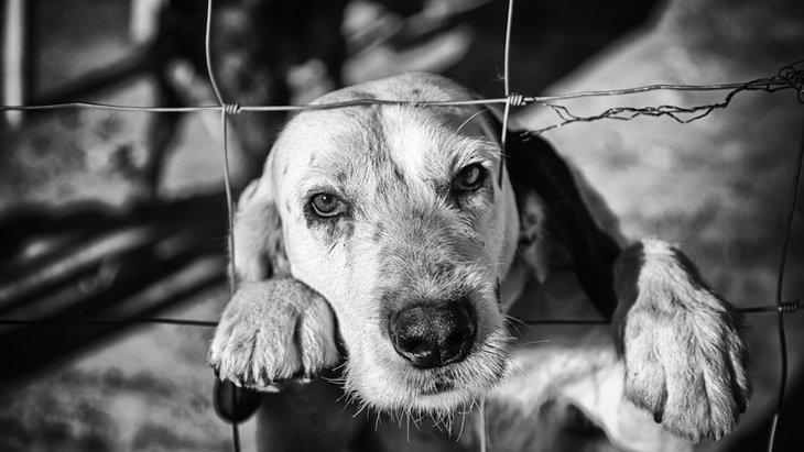 犬は不衛生な環境にいるとどうなる?理解しておくべきリスク