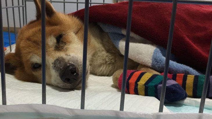 寝たきり状態の老犬をお迎え。老犬介護の経験を通して感じたこと