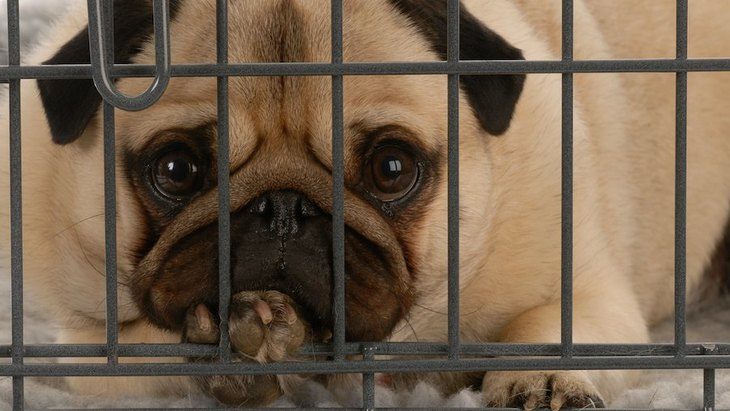 犬がケージを噛む理由5つ!適切な対処法や注意点