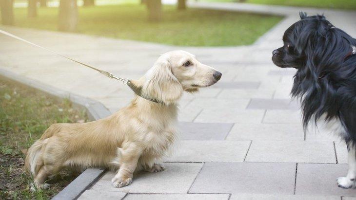 犬の『足』でわかる心理6選!こんな姿勢や歩き方で気持ちを読み取ってみて