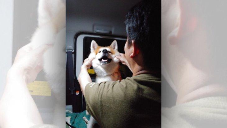 「お前いい加減にしろよ〜♡」秋田犬とパパの攻防が完全にカップル仕様な件