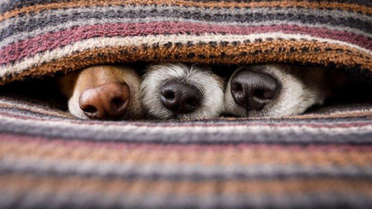 なぜ、健康な犬の鼻は常に濡れているの?もし、ずっと乾燥していたら要注意?
