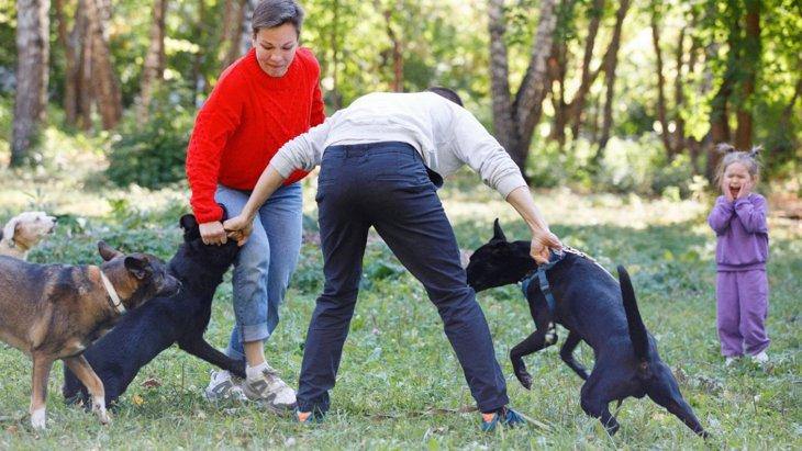 必ず見極めて!犬が本気で怒っている時に見せる行動や仕草5選