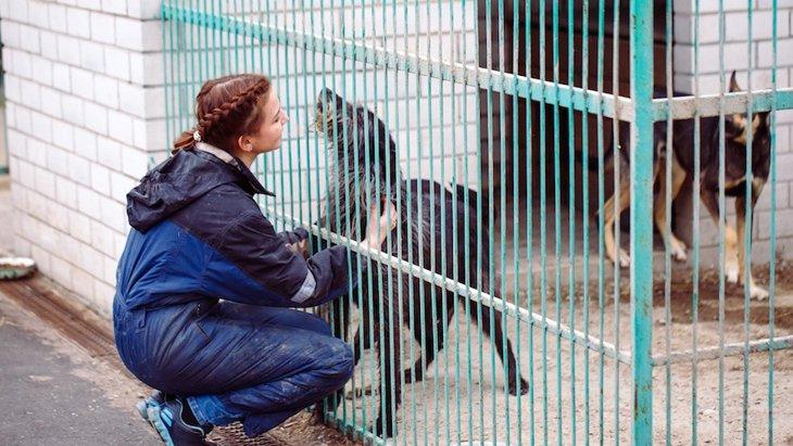 大学生とシェルターの保護犬の運動不足を一挙に解決するプログラム!