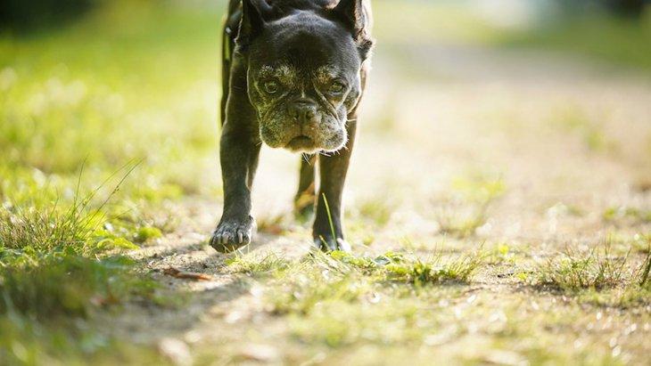 犬が死に際に飼い主から離れたがる理由4つ