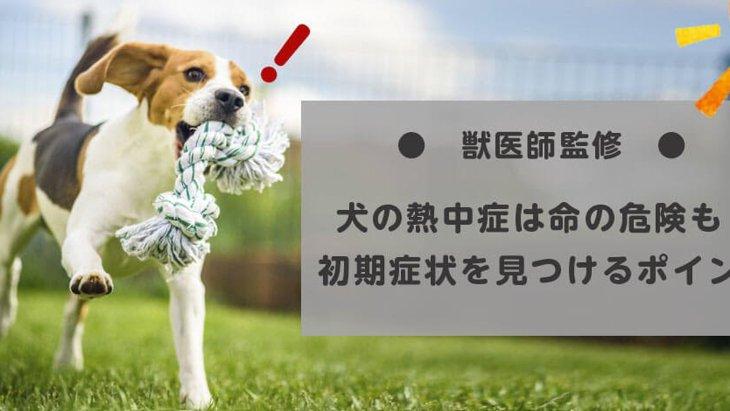 【獣医師監修】犬の熱中症は命の危険も!