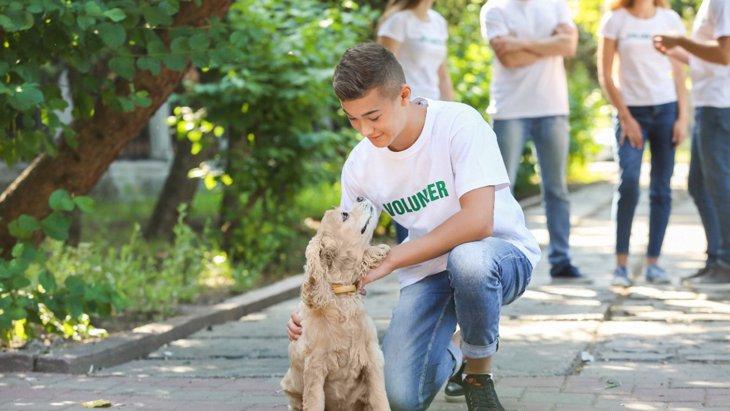 保護施設の犬の夜間の行動は適応性の指標になるという研究結果