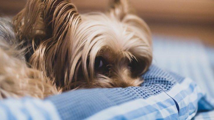 犬が『興味のない人』に見せる態度4つ