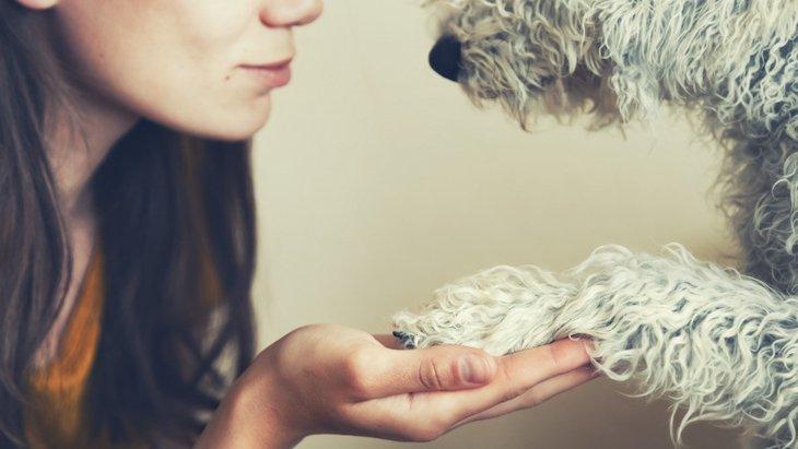 犬が突然吐く原因と適切な対処法