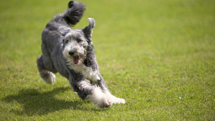 犬の免疫力を上げる3つの方法!取り入れたい食事や生活習慣