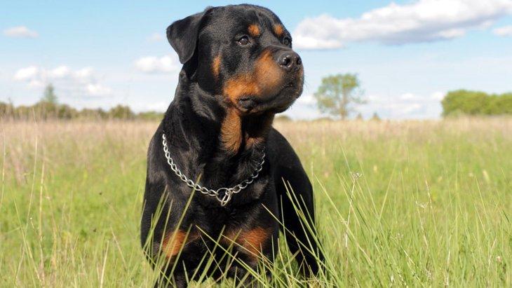大型犬を飼うときに覚悟しておきたい『3つのこと』