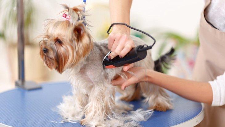 動物看護師が持っている資格について