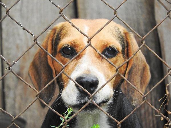 米国が動物保護施設を一時閉鎖した理由が素晴らしい!