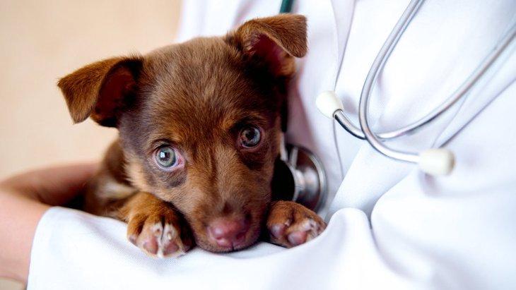 犬が『苦しそうにしている』ときに考えられる原因6つ!適切な対処法まで