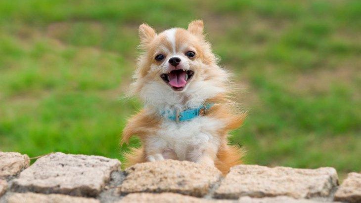 愛犬から『愛されている』と感じる瞬間5選