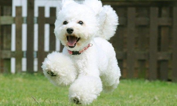 『犬を愛しすぎている人』がよくする行動や習慣4選