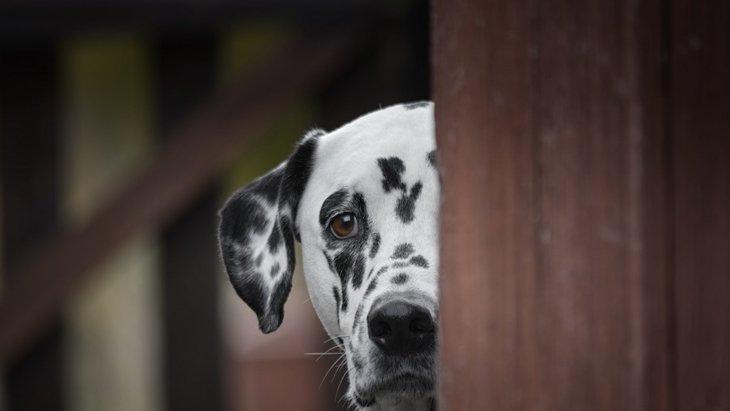犬が叱られている時によく見せる仕草5つ