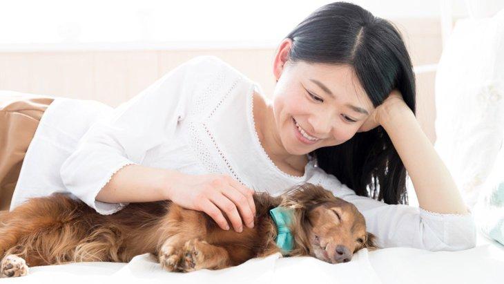 犬が床で寝る2つの理由