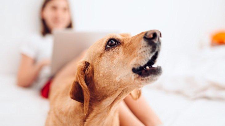 犬は『鳴き声』で気持ちがわかる!鳴き方別の心理とスキンシップの取り方を解説