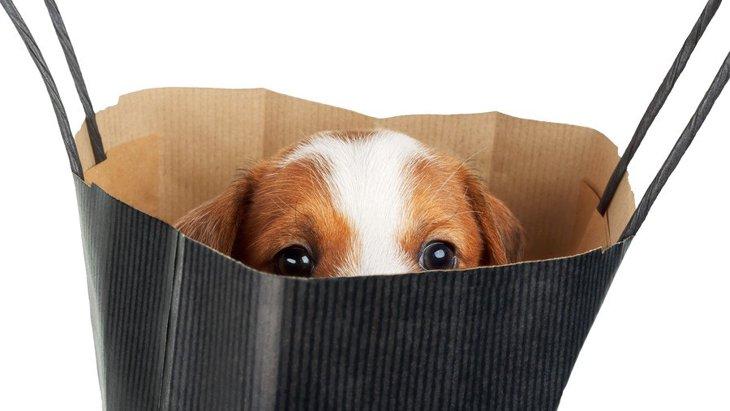 『恥ずかしがりやな犬』がよくする仕草や態度3選