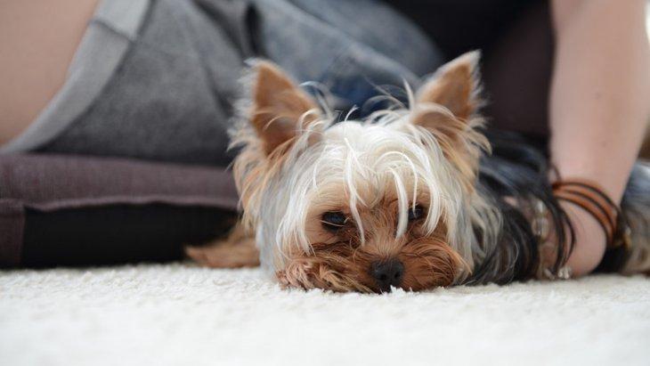 愛犬が疲れやすくなっている時に考えられる5つの病気