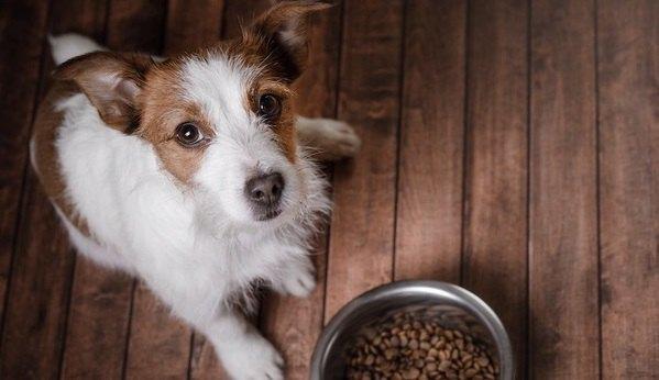 犬のご飯におすすめ♡食いつきが良くなるトッピング4選