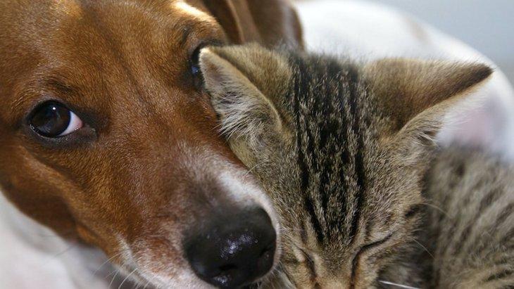 ペットの存在がうつ病治療の補強になるという研究結果と疑問
