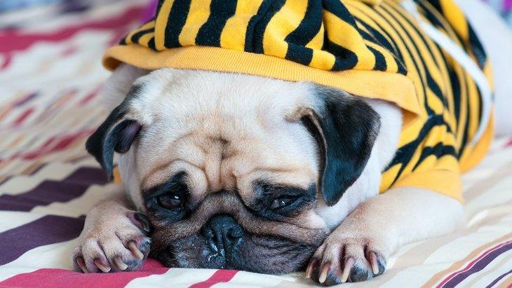 犬が突然吠えなくなった時の心理3選!普段は吠えまくるのに…なぜ?