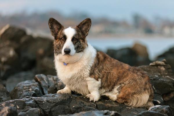 フリスビードッグはどの犬種でもできるドッグスポーツ!競技の種類と練習方法