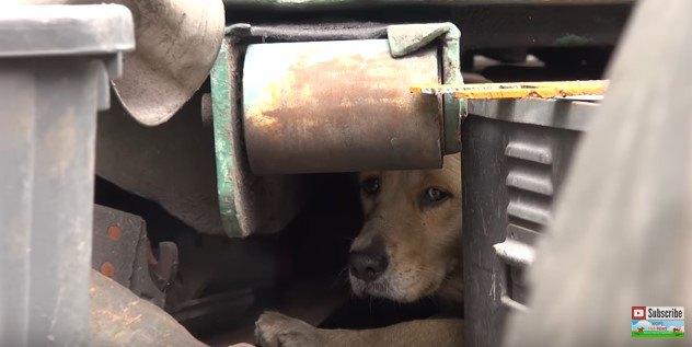 怯えきった大型犬を保護。恐怖のあまりパニックになった犬を救う一部始終