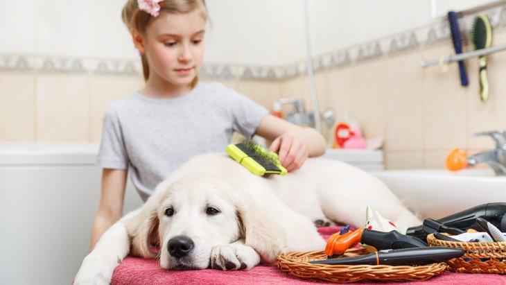 愛犬に合ったブラシの選び方と使い方、慣れさせる方法