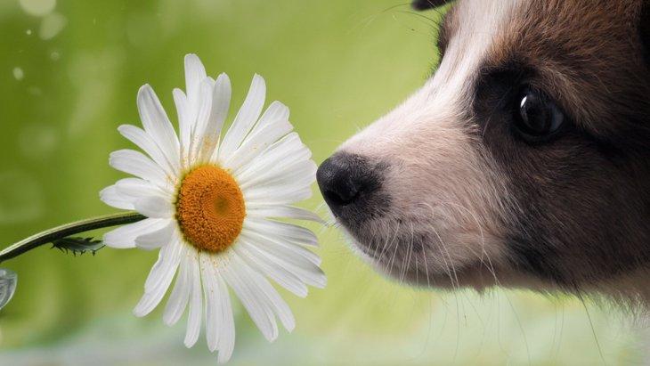 犬がにおいを嗅いでいるときにするべきではないNG行為2つ