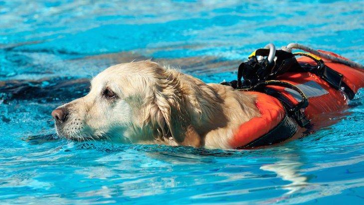 犬が行動を抑制する能力は訓練によって向上するだろうか?という研究