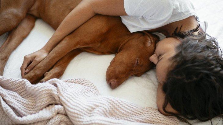 犬が人の近くで寝る時の心理5選!場所によって気持ちが異なるって本当?